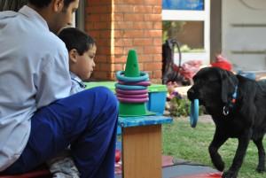 perros de apoyo de terapia 1